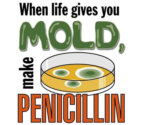 mold and penicillin