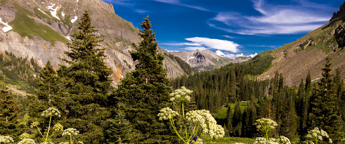 Colorado mountains surrounded by trees on a sunny day Colorado Allergy & Asthma Centers